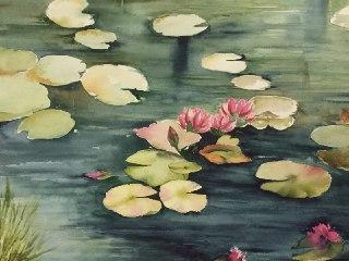 گل نیلوفر آبی2